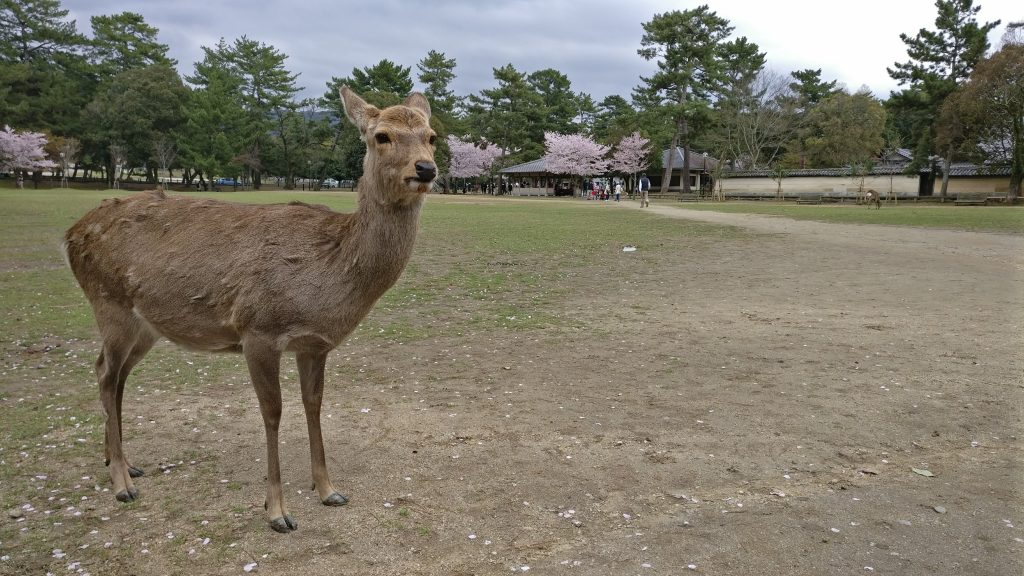 Japon 2016 Nara